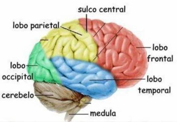 Herbalife Lavagem Cerebral Na Prática Parte 2 A