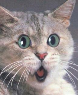 scary_cat